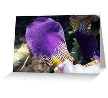 Iris Petal Greeting Card