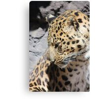 Shy Leopard Canvas Print