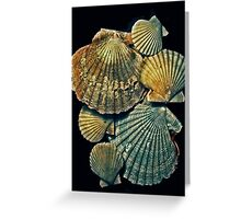 fossil pectens Greeting Card