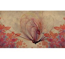 The Humming Bird Photographic Print