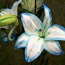 A Painted Lily by Glenna Walker