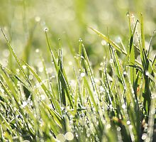 Green green grass of home  by ClaireWroe