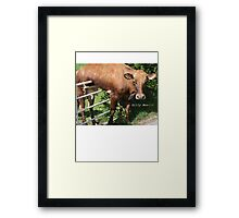 Silly Moo!!! Framed Print