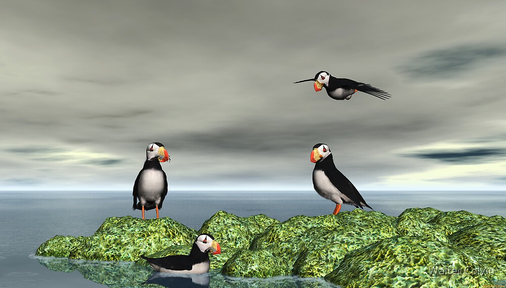 Horned Puffins by Walter Colvin
