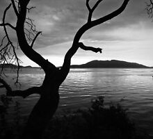 Sunset Tree (B&W) by Appel