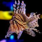 LionFish by Raquel Perryman