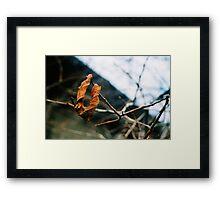 Last Day Of Autumn Framed Print