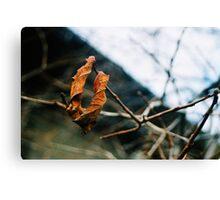 Last Day Of Autumn Canvas Print