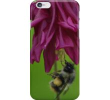 Bumble Bee With Massive Pollen Sacks On A Columbine iPhone Case/Skin