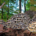 Meeting of the mushrooms by gnubier