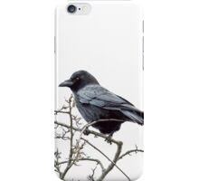 Jackdaw on a branch iPhone Case/Skin