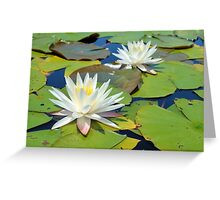 Egyptian White Water Lilies Greeting Card