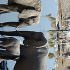 African Elephants and Zebra at the waterhole by JRHall