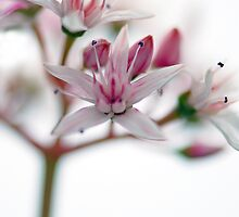Watercolour Blossoms by Renee Hubbard Fine Art Photography