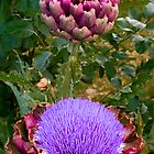 Artichoke 3 by Geoff Carpenter