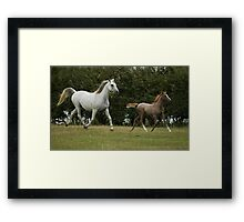 Moving Mare and Foal Framed Print