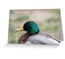 Quackers (Y) Greeting Card
