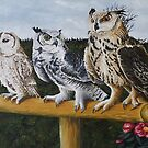 Owls - Rocky,Wizard and Ollie by Pauline Sharp