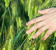 Woman Touching Wheat Ears by Inimma