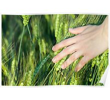 Woman Touching Wheat Ears Poster