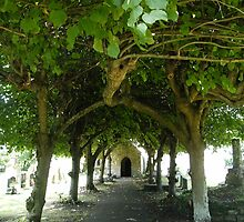 Tree arch cannopy leading to the doorway of Goldcliffe church in South Wales by Joyce Knorz