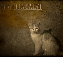 Cat on cemetery by Igor Giamoniano