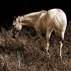 White mare by Gili Orr
