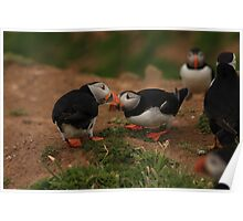 puffin fencing full size Poster