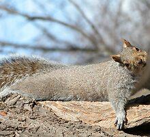 Squirrel by kr1sta
