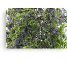 Wisteria Takes Over The Woods Canvas Print