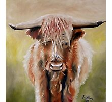 Hamish the Highland Cow Photographic Print