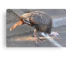 Weedy Field's Friendly Turkeys Metal Print