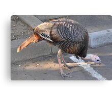 Weedy Field's Friendly Turkeys Canvas Print