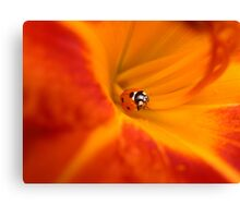 Ladybug in a Lily Canvas Print