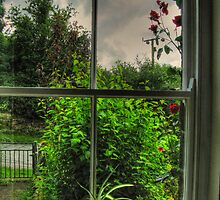 Cottage Window, Clouds & Roses by PhotogeniquE IPA