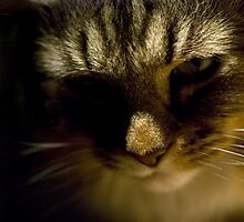 kitty kitty by hannahelizabeth