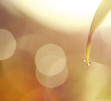 drops of jupiter by Julia Wang