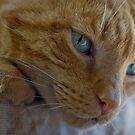 RIP, my sweet Bob Cat by jude walton