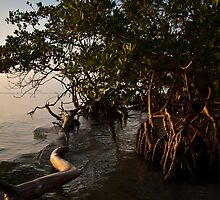 Mangrove trees at early morning. by Karel Kuran