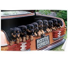Rottie Express Poster