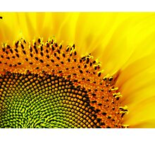 Sunny Face  Photographic Print
