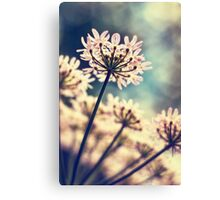 Queen Annes Lace flowers Canvas Print
