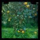 Citrus TTV by ozzzywoman