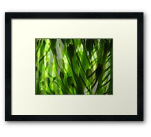 Broccoli Forest Framed Print