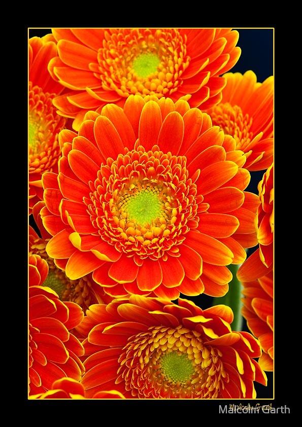 Orange 1 by Malcolm Garth
