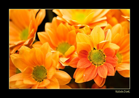 Orange 2 by Malcolm Garth