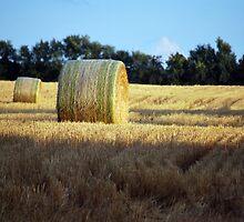 Hay Field No 10  by Michelle BarlondSmith
