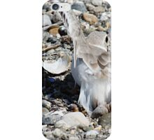 Piping Plover Using The Broken Wing Ploy iPhone Case/Skin
