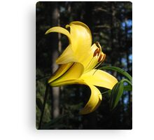 Brilliant Yellow Lily! Canvas Print