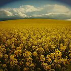Fields of Gold by creativemonsoon